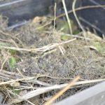 Der Wurzelfilz wird auf dem Kompost entsorgt.