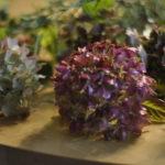 Die verblühten Hortensien sind dankbare Kranzblumen: sie generieren viel Volumen und geben ein verträumtes Ambiente.