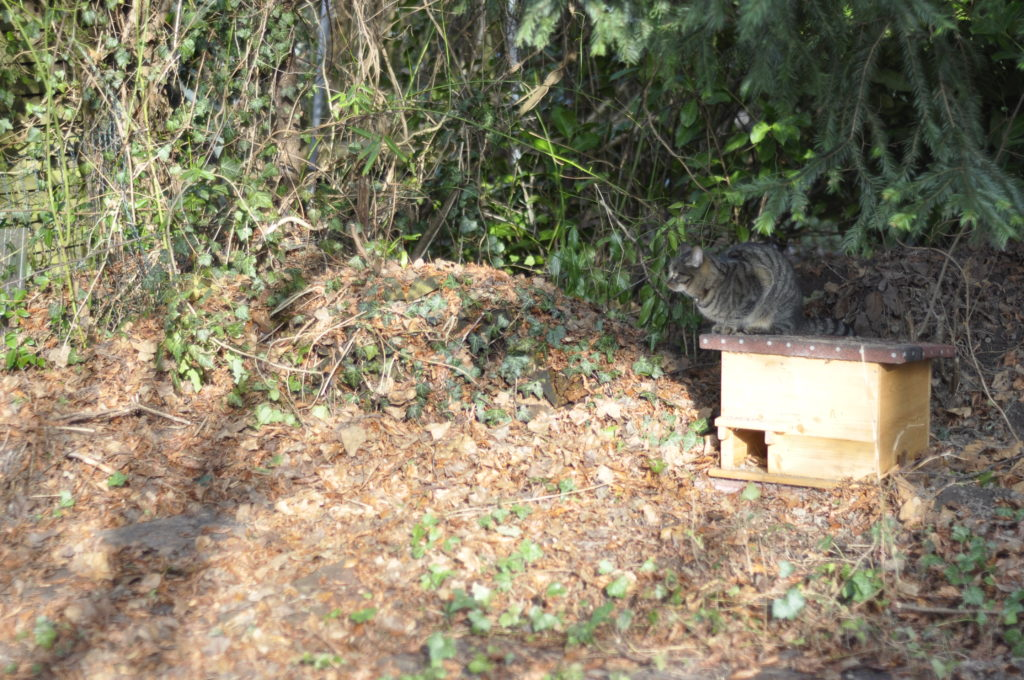 Unser Totholzhaufen, der schon seit einigen Jahren vor sich hin rottet. auf der linken Seite hat ein Tier eine Höhle gegraben und im letzten Jahr hat sich darin ein Wespenvolk angesiedelt. Leider ist es in diesem Jahr nicht mehr zurück gekehrt.