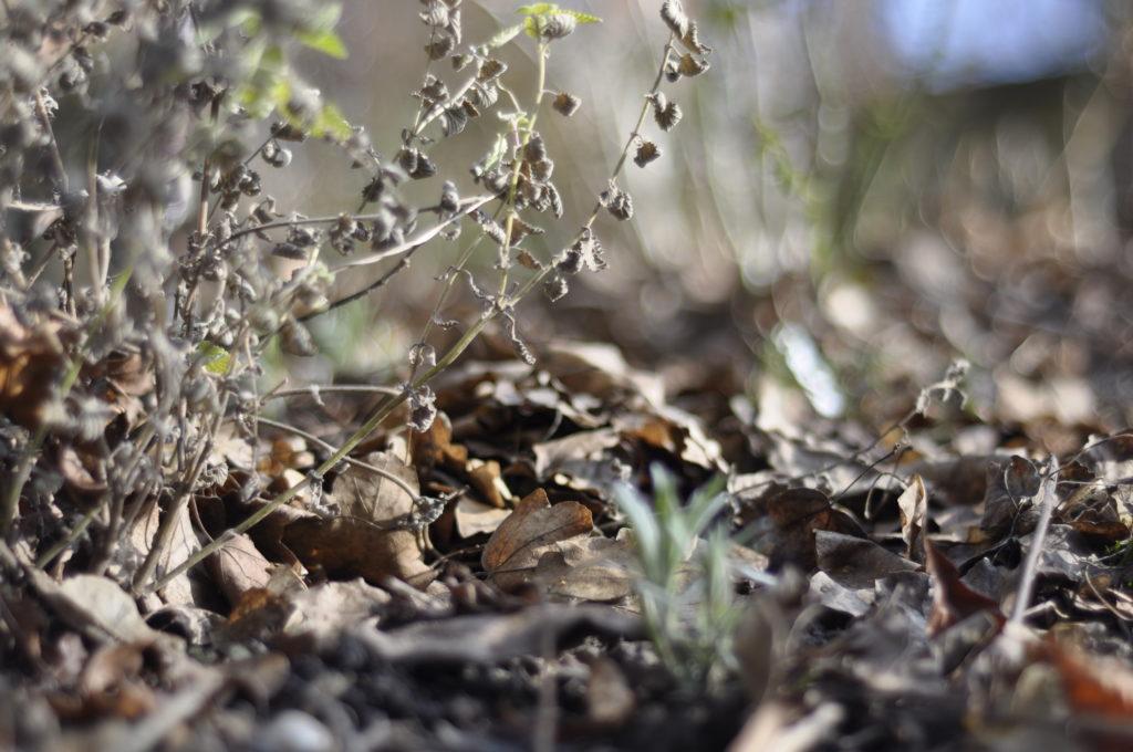 Ein Beet einmal aus Insektenperspektive: mit den verblühten Stauden und dem Laub wirkt es fast schon kuschelig.