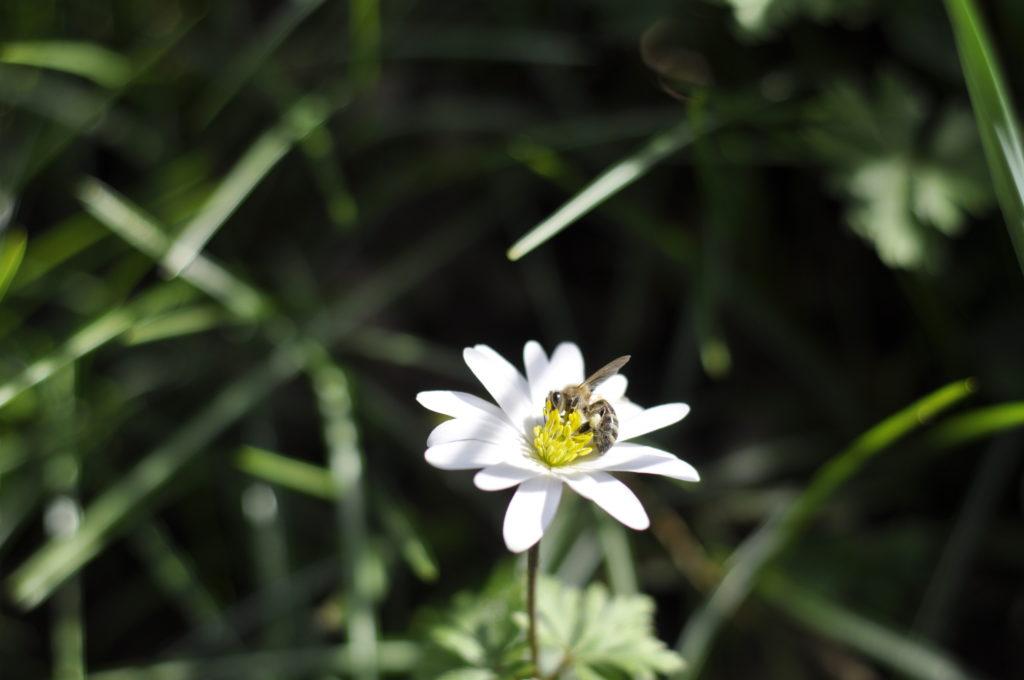 Insektensterben 2