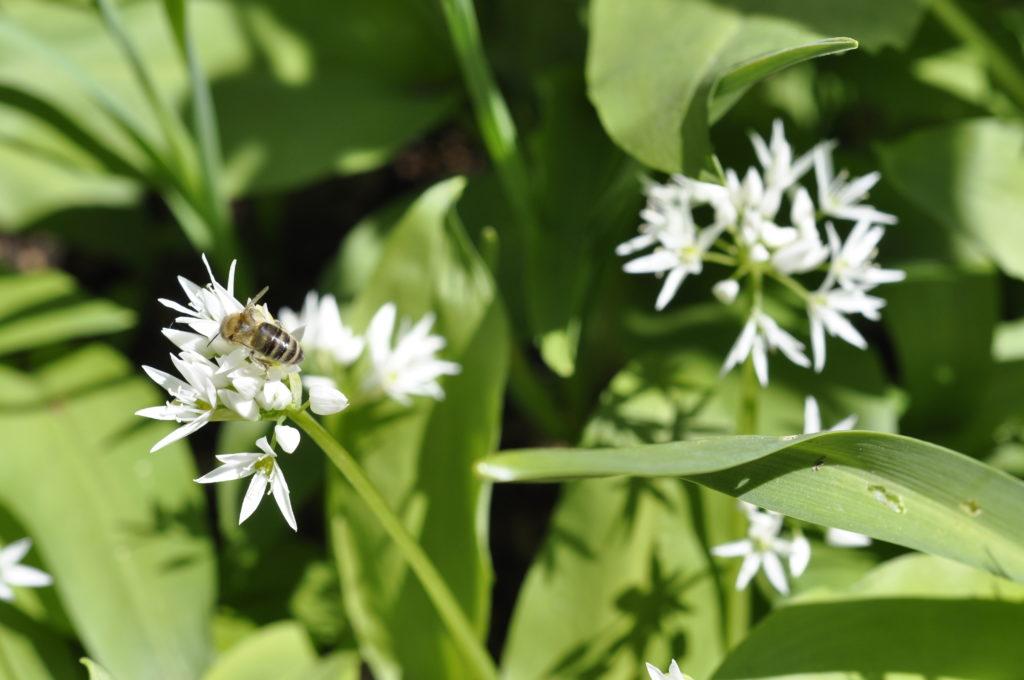 Insektensterben 6
