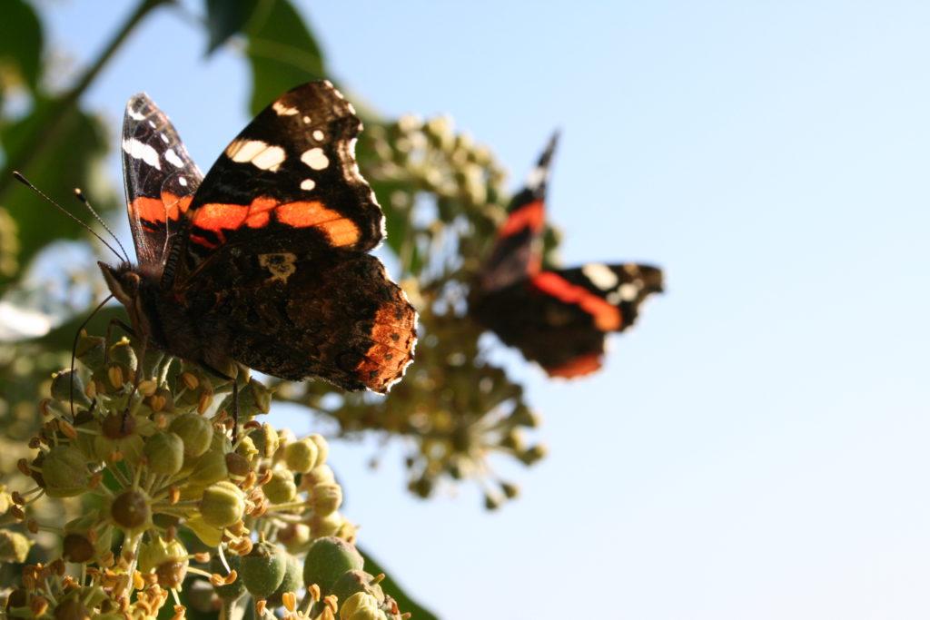 Insektensterben 4