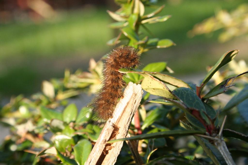 Insektensterben 5