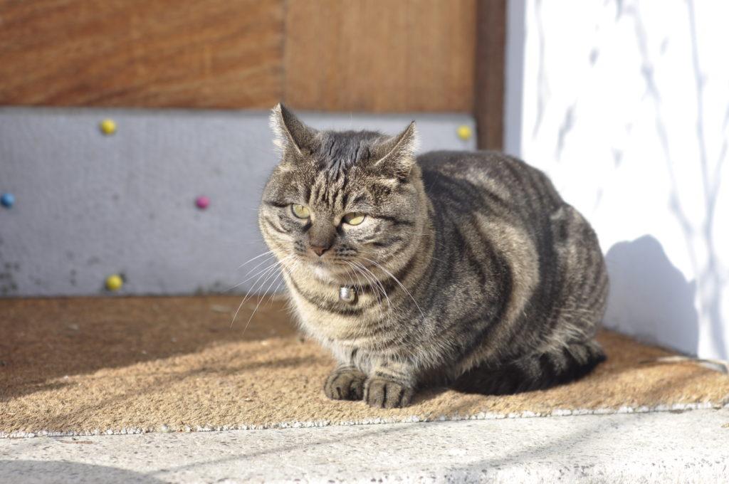 Momo geniesst das warme Januarwetter.
