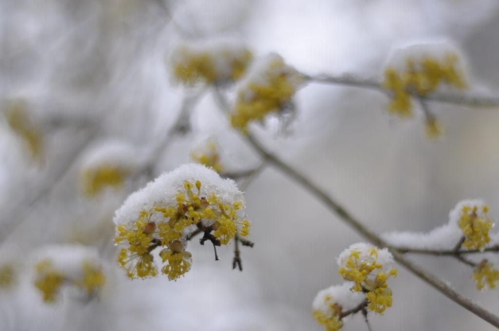 Blütenüberblick 2018 67