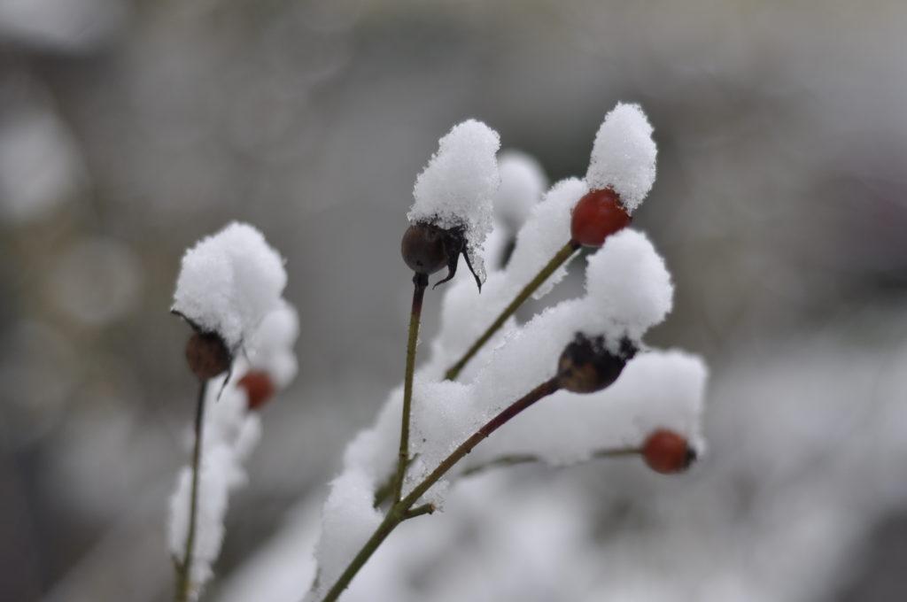 Blütenüberblick 2018 69