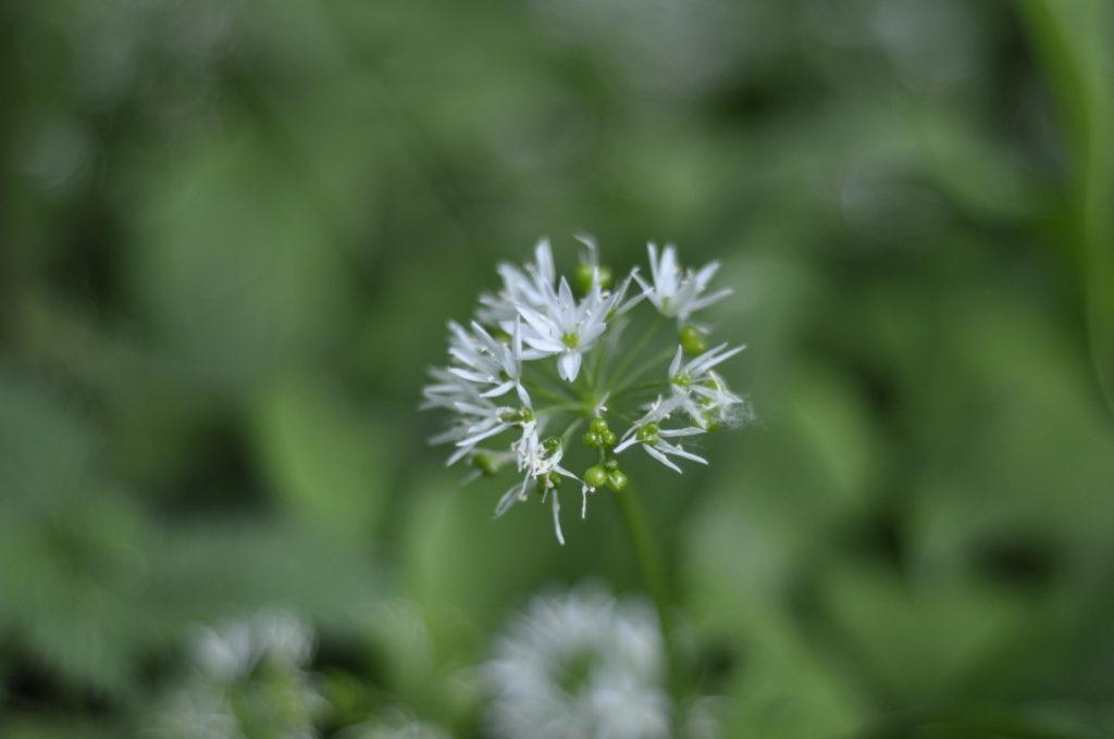 Blütenüberblick 2018 7