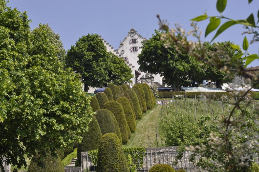 Setzlingsmarkt Schloss Wildegg 310