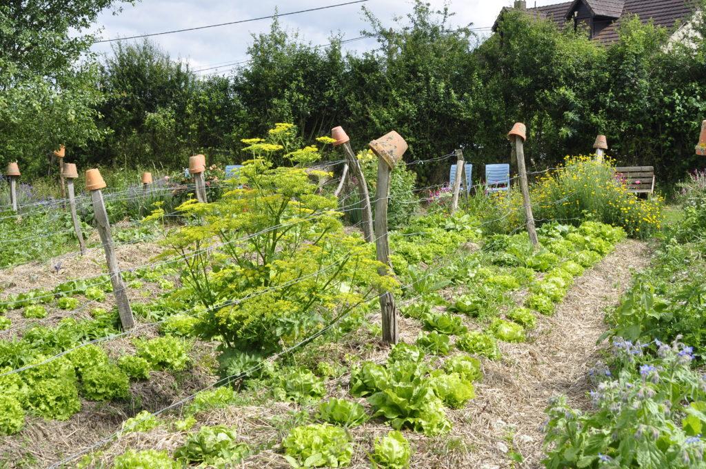 Permakulturgarten Jardin d'Alôsnys 30