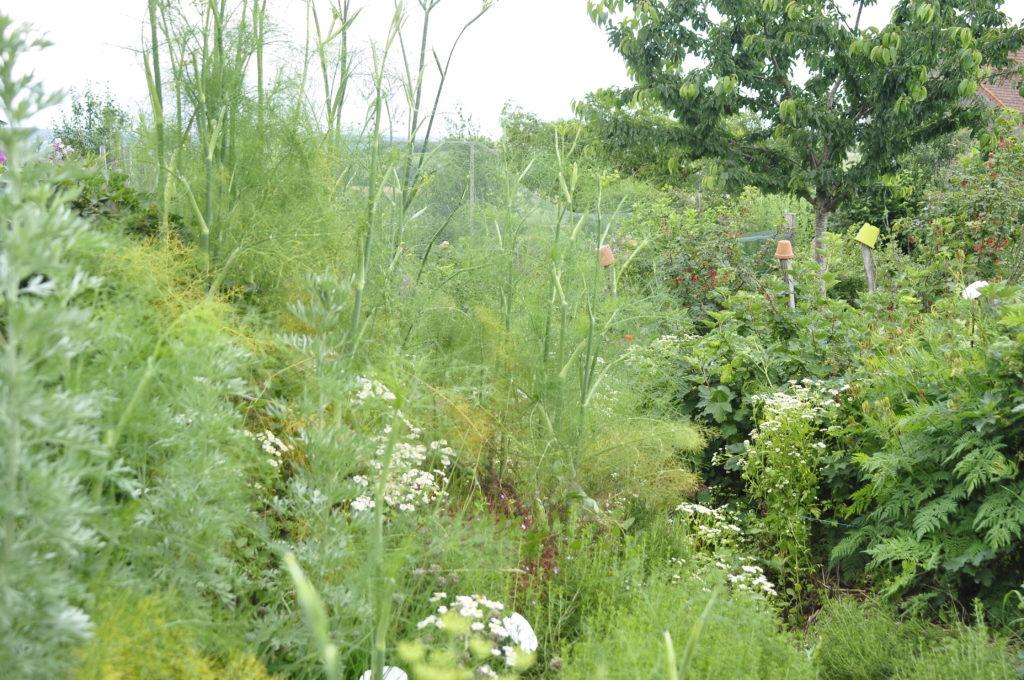 Permakulturgarten Jardin d'Alôsnys 13