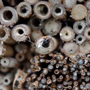 Wildbienenhaus gemeinsam bauen