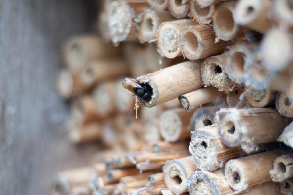Wildbienenhaus gemeinsam bauen 71