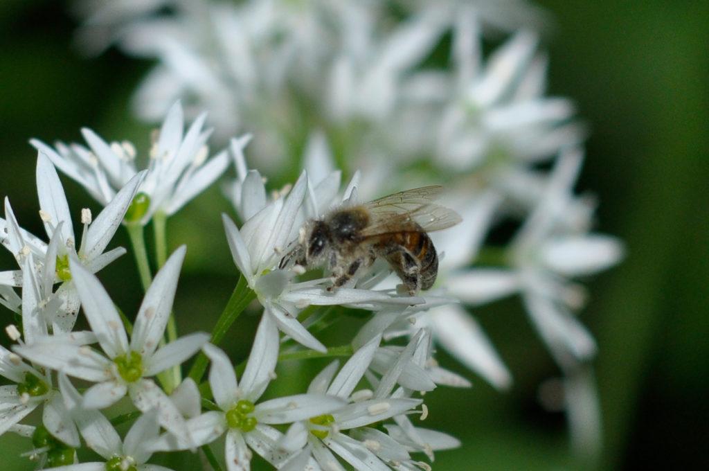 Wildbienenhaus gemeinsam bauen 70