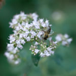 Wildbienenhaus gemeinsam bauen 76