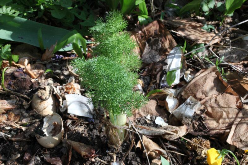 Gemüsezierpflanzen 1