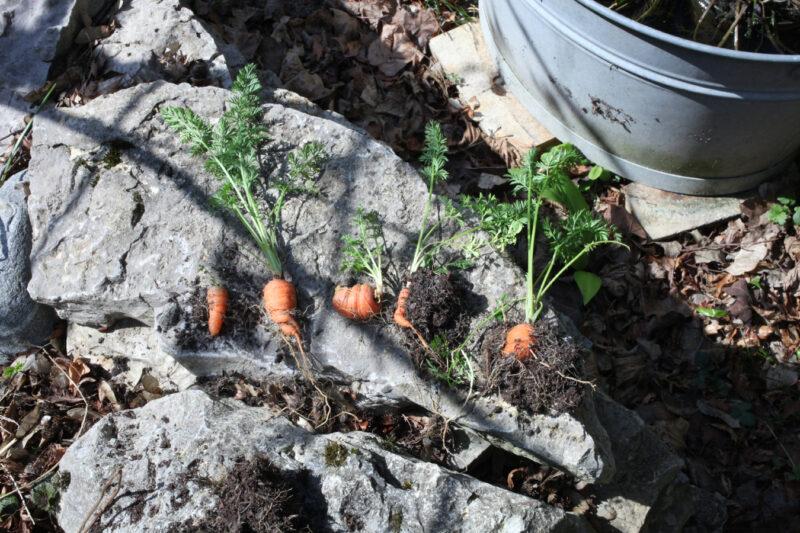 Gemüsezierpflanzen 3