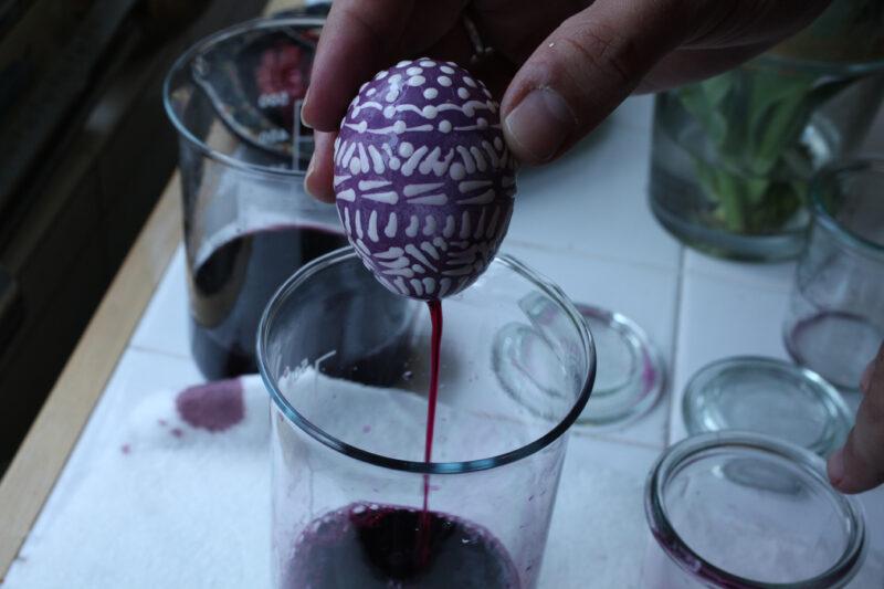 Mit Blauholz gefärbtes Ei beim entleeren des Suds.