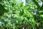 Setzlinge gepflanzt