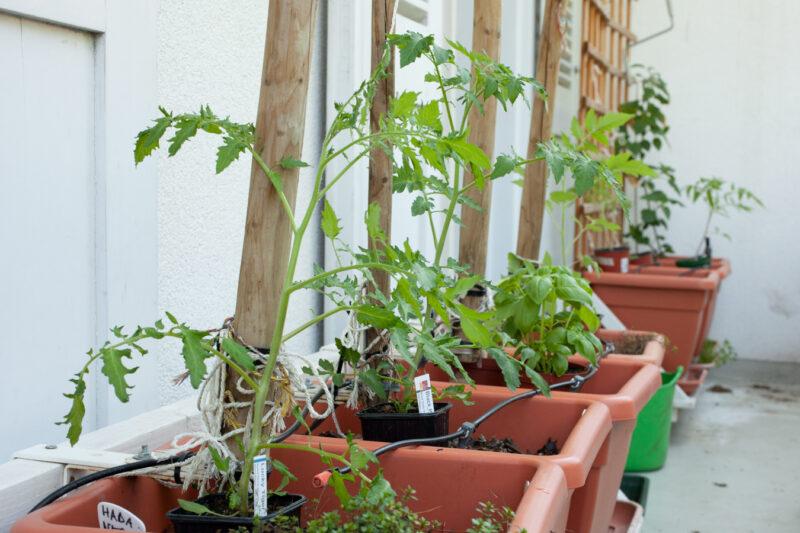 Setzlinge gepflanzt 15