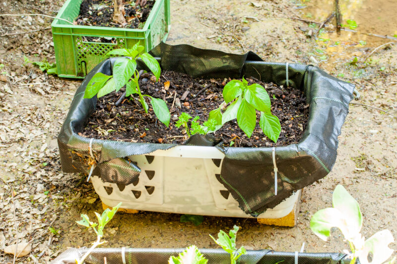 Setzlinge gepflanzt 5