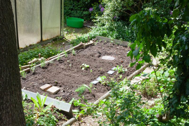 Endlich Gemüse anpflanzen!