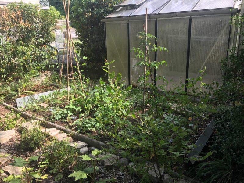 Das Gemüse wächst! 2